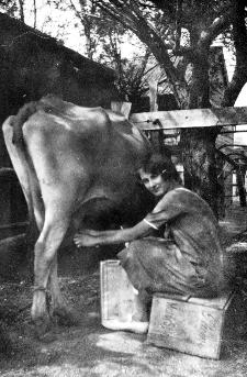 Ella at Brookville milking her cows.JPG